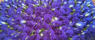 цена пурпурного чая чанг шу